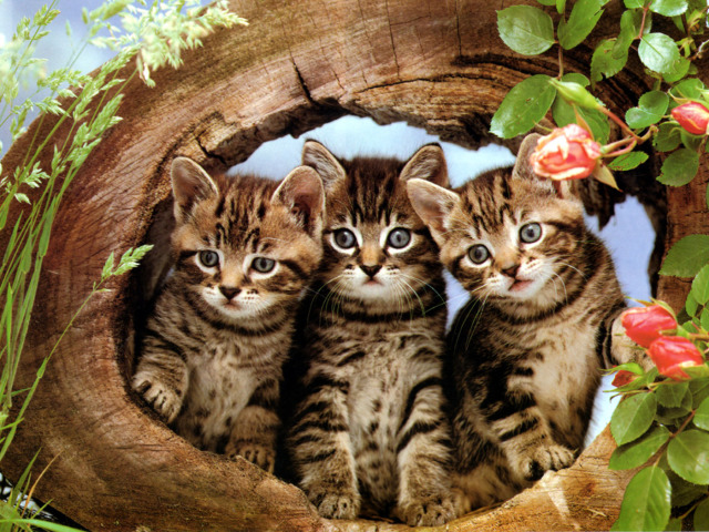 Cats In A Log Wallpaper