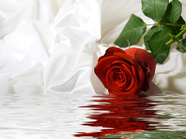Rose Dipped In Water Wallpaper