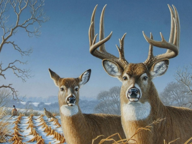 Deer Wallpaper
