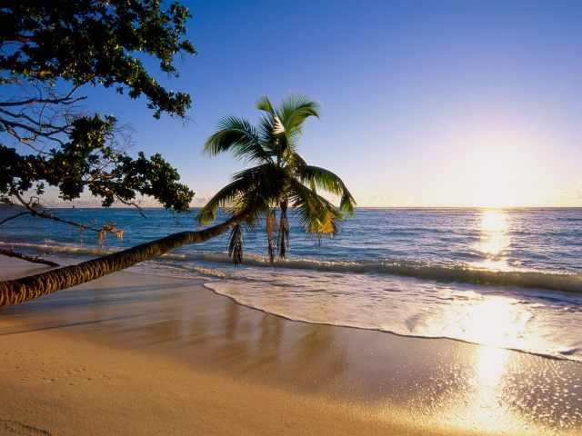 Tropical Sunshine Wallpaper