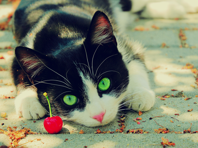 Cat With Red Cherry Wallpaper